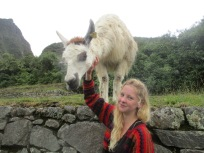 Llama being tamed by myself